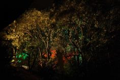 Landscape Lighting design_Insight Light_NZ Pohutakawa.jpg
