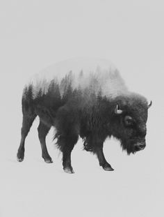 Bison (black & white version) Art Print