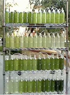 An Algae Bioreactor from Recycled Water Bottles. Extra oxygen in your own backyard.
