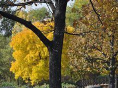 Breath Of Fall