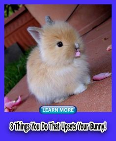 Rabbit Bunny Make, Cage, Indoor, Toys, Photography, House, DIY, Accessories, Names,  Outdoor, Food, Room, Supplies, Apartment, Bonding, Clothes, Cute, Tips,  Habitat, Leash, Funny, Behavior, Hacks, Play, Hutch, And Cat, Home, Litter,  Training, Enclosure, Pictures, Diet, Bed, Pen, Quotes, Photoshoot ,Costumes For Cute Little Animals, Cute Funny Animals, Super Cute Animals, Animal Pictures, Cute Pictures, Random Pictures, Baby Pictures, Tier Fotos, Cute Creatures
