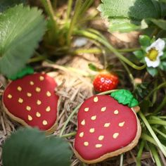 I love you BERRY much! ❤️🍓 #cookies #ButterLove