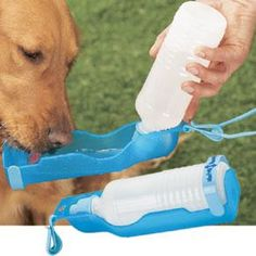 Three Easy Ways to Ruin Your Dog's Summer (Summer Safety Tips)
