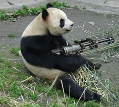 3 Ways to make Quora Your Secret Marketing Weapon (get a Panda with a gun!)