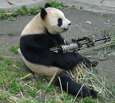 3 Ways to make Quora Your Secret Marketing Weapon (get a Panda with a gun!)
