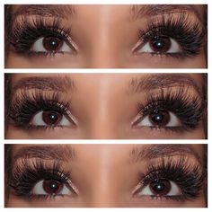 our •Kylie• lashes are now available for pre-ordergrab yours before they sell out again! All our #MinkLashes are custom designed & handcrafted with loveget up to 25x use with proper care ✨www.LashBunny.com✨ #LashBunny