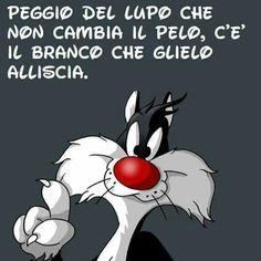 Gatto Silvestro