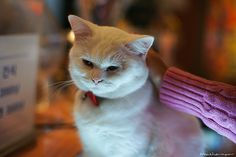 Cat       Cat  Posted by iweatherman  on 2012-10-14 15:11:39      Tagged:  , cat , 고양이 , animal , 동물  - http://newsyork.gq/cat-92/