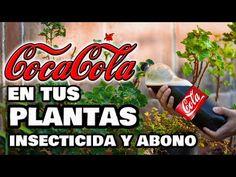 ¡INCREÍBLE INSECTICIDA y ABONO con COCA-COLA! Plantas y Huerto Urbano 🥤 Fungicida Pesticida Casero - YouTube Coca Cola, Baby Center, Remedies, Bonsai, Youtube, Plants, Gardening, Ideas, Gardens