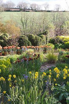 Jake Hobson Cloud Pruning and Organic Topiary