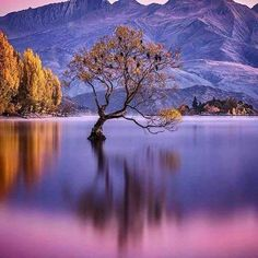 The lone tree of Lake Wanaka. Lake Wanaka, New Zealand. Photography by photography Beautiful Dream, Beautiful Places, Lake Wanaka, Destinations, Nice View, Land Scape, Travel Inspiration, Nature Photography, Earth