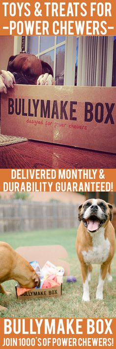 Is your dog a POWER CHEWER? Get DURABLE toys and DELICIOUS treats delivered monthly! All toys guaranteed 14 days or we replace them for free. See here: https://bullymake.com/?utm_source=pinterest&utm_medium=pinterest-ads&utm_term=bx-jan10&utm_content=bx-jan10