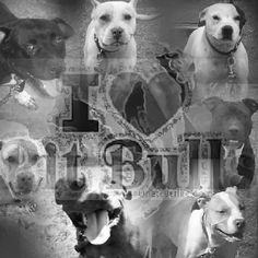 Image detail for -Pit Bull Quotes Good Dogs submited images | Pic 2 Fly