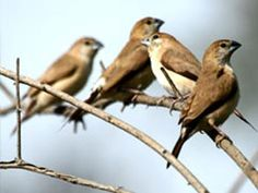 Pranahita Wildlife Sanctuary - in Adilabad, Telangana, India