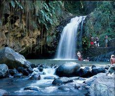 the rainforrest in Grenada....love it....never been treated better anywhere...Rita