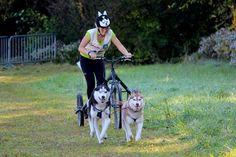 Helmet Covers, Husky, Dogs, Animals, Animais, Animales, Animaux, Pet Dogs, Doggies