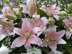 фотографии цветов - 17 -08