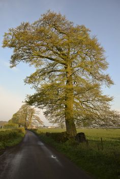 One of my favourite trees not far from the house