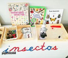 proyecto Montessori sobre los insectos