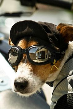 Goggles for your Dog = Doggles                                                                                                                                                                                 More
