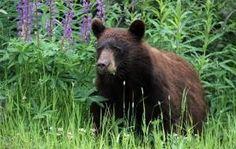 Minnesota Mammals: Investigate Their Lives Saint Paul, MN #Kids #Events