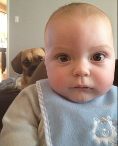 85 Amazing Animal Photobombs (PHOTOS)