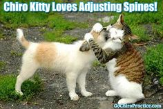 Chiro Kitty Loves Adjusting Spines! #GoChiro #ChiroKitty
