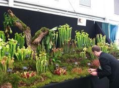 carniverous plants terrarium - Google Search