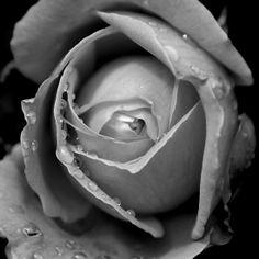 'Morning dew' by Sophie Watson Morning Dew, Art Work, Rings For Men, Photography, Image, Artwork, Work Of Art, Men Rings, Photograph
