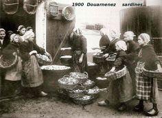 15_1900_5_douarnenez_sardines