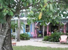 Island Cow-Sanibel Island - our favorite place one the island!  I want to go!