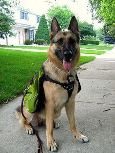 Doggie backpack.