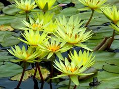 National Geographic Your Shot Jacksonville Zoo, National Geographic Photos, Water Lilies, Amazing Photography, Lily, Flowers, Plants, Animals, Lotus