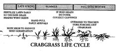 """The Crabgrass Strategy So here is a strategy to rid your lawn of crabgrass and many other similar grassy weeds. In the spring, instead of using crabgrass killer, overseed your lawn to make it more dense. Then you raise your lawn mower to 2 or better 2 ½ inches for the whole season. You will still have some crabgrass, but not as much as last year. Then in the fall, overseed the lawn again. Keep that lawn mower high from then on and by the third year you will see very little crabgrass."""