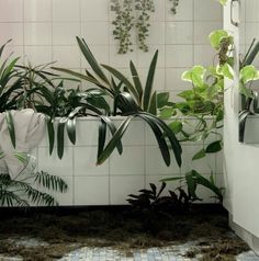 green plants and white tiles