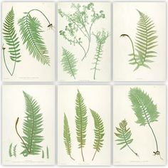 Large scale fern printables - find an image by clicking on a 'Plate' in the page list to the left