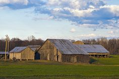 Old barns located in St Marys county. They dot the countryside and roadways all over this part of Maryland.