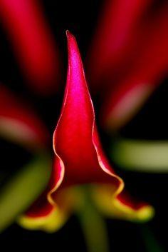 Flower n only Flower.