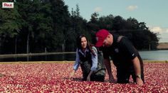 Have you ever wondered how your favorite foods GROW? @HowGrow :from field to fork...http://ospa.me/1uivcrg  @ronaberg