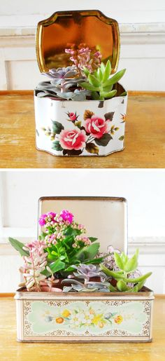Succulents in vintage tins.It is nice to have a selection of different succulents in a tin like a small garden. Cacti And Succulents, Planting Succulents, Planting Flowers, Greenhouse Gardening, Container Gardening, Air Plants, Indoor Plants, Decoration Plante, Cactus Y Suculentas
