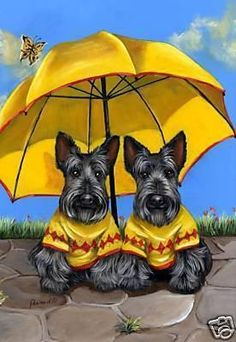 Scottish Terrier Sunshine Twins-LF