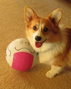 soccer, anyone?