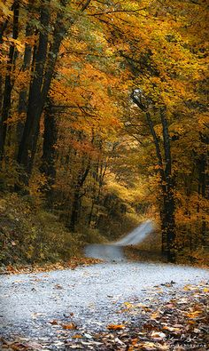 Autumn back road ❤️ Beautiful Places, Beautiful Pictures, Autumn Scenery, Back Road, All Nature, Fall Pictures, Take Me Home, Pathways, Countryside