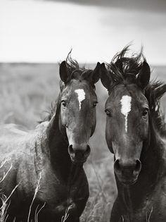 Wild Duo
