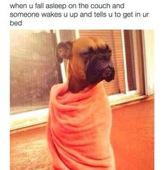 The importance of naps: | 27 Animals Hilariously Embodied What It Means To Be Human
