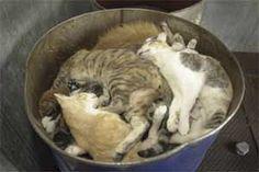 killsheltercats.jpg  - ADOPT A STRAY