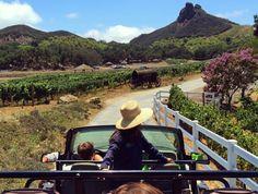 Wine Safari | Discover Los Angeles