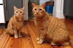"Assistant Photographer Jessica D. shares a photo of Parker, the stray-turned-feline-model you can find in our catalog and on our web site. Here's he's pictured with his ""big brother,"" Captain."