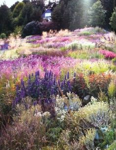 """Pastel drifts…Piet Oudolf garden"" I just kinda want to roll around in it and"