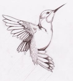 Drawings birds humming bird sketch on deviantart Bird Drawings, Animal Drawings, Easy Drawings, Drawing Sketches, Pencil Drawings, Sketching, Drawing Birds Easy, Sketches Of Birds, How To Draw Birds